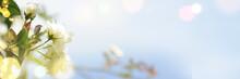 Spring Border, Season Background