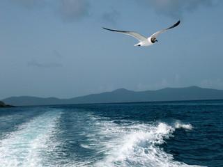Fototapeta Ptaki seagull flying over sea