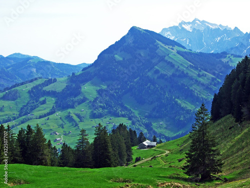 Fototapety, obrazy: Evergreen or coniferous forests on the slopes of the Churfirsten mountain range and in the Obertoggenburg region, Nesslau - Canton of St. Gallen, Switzerland