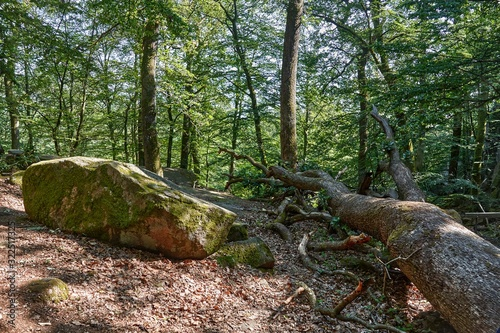 Echo Valley - boulders in a forest, vicinity of Aakirkeby, Bornholm island, Denm Wallpaper Mural