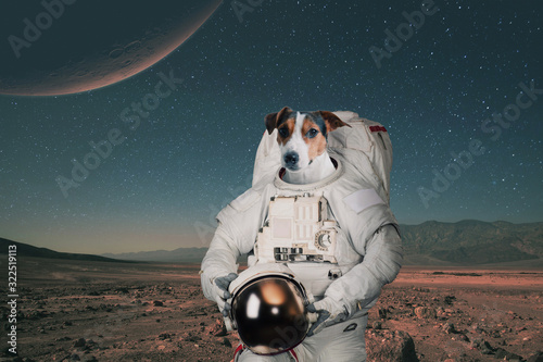 Tableau sur Toile Dog astronaut in a space suit with a helmet travels on Mars