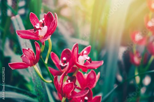 piekne-kwiaty-orchidei-w-ogrodzie