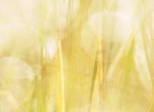Wet Wildflowers Or Weeds Growi...