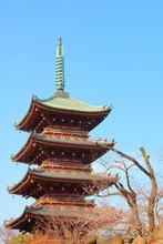 Ueno 5-Story Pagoda With Cherr...