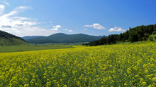 Rapeseed Field In The Valley; Beautiful Field In Spring Against The Blue Sky
