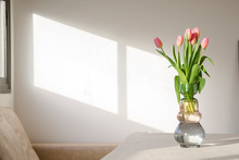 Cute Pinkish Spring Tulips In ...