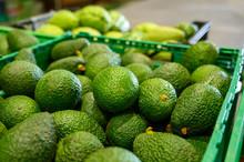 Fresh Ripe Green Avocados In Box On Farmers Market In Spain