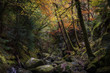 Rocky gorge in autumn forest.Tranquil nature scene with atmospheric mood.Beautiful woodland landscape in Scottish Highlands.