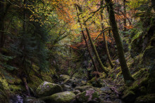 Rocky Gorge In Autumn Forest.T...
