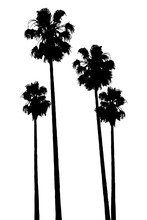 Palm Tropic Silhouettes Set Is...