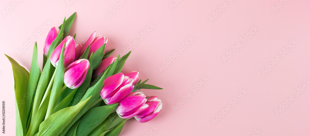 Fotografie, Obraz Pink tulip flower on blue wood table background with copy space for text
