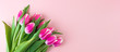 Pink tulip flower on blue wood table background with copy space for text. Love, International Women day, Mother day and Happy Valentine day concept