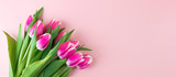 Fototapeta Tulips - Pink tulip flower on blue wood table background with copy space for text. Love, International Women day, Mother day and Happy Valentine day concept