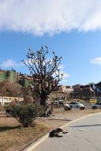 Drzewo Życia, Drzewo Życzeń, Tbilisi W Gruzji