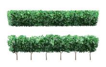 Realistic Garden Plant Fence. ...