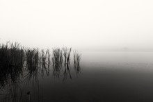 Landscape Of A Dam With Reeds ...