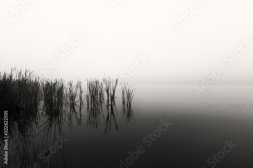 Cuadros en Lienzo Landscape of a dam with reeds in still water on a foggy morning