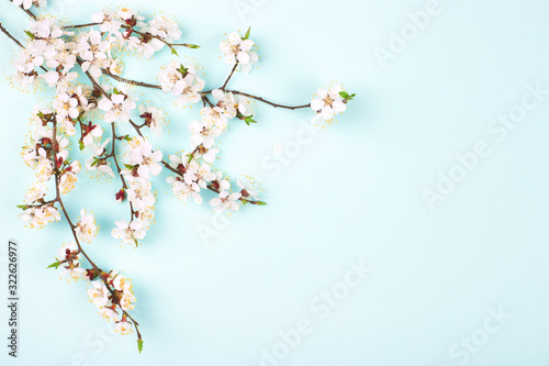 Photo Branches of blossoming apricot flower on blue background with place for text