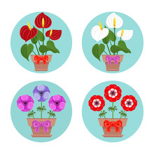 Red, Pink And Purple Anemone, Anthurium White And Red Flowers In  Pot With Bow. Icon In Simple Flat Style.  Vector Cartoon Illustration Isolated On White.