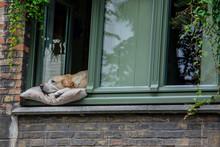 Dog Sleeping In Window In Belg...
