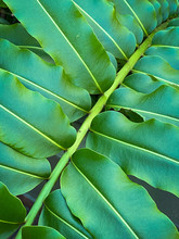 Green Tropical Plants In Jungl...
