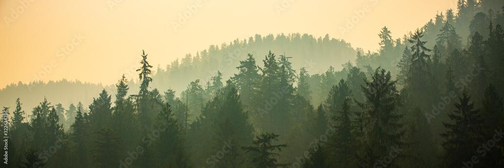 Fototapeta panoramic view of forest