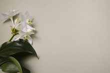 White Lilies With Green Leaves...