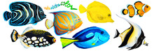 Set Of Tropical Reef Fish Clow...