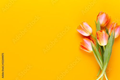 Yellow pastels color tulips on yellow background. #322644175