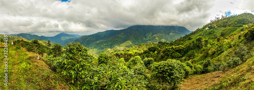Photographie Blue mountains of Jamaica coffee growth place