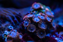 Pretty Anemones In Sea Coral Reef Aquarium Motion Nature
