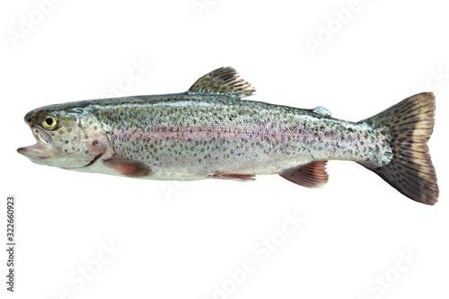Obraz na plátně Rainbow trout isolated on white