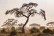 canvas print picture - Amboseli Trees