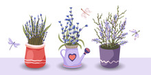 Provence Floral Vector Set. Big Flat Natural Flower Plant Bouquet Collection With Lavender In A Pot And Butterfly.