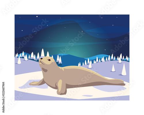 Fototapeta seal at the north pole, arctic landscape obraz