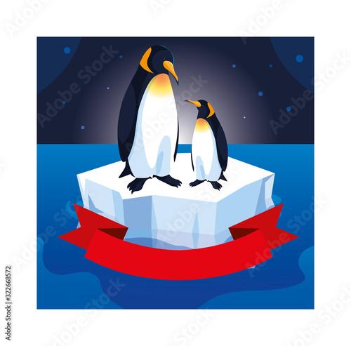 Fototapeta penguin couple on an ice floe drifting obraz
