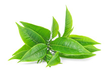 Green Tea Leaf On White Backgr...
