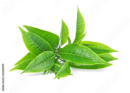 Fototapeta green tea leaf on white background obraz