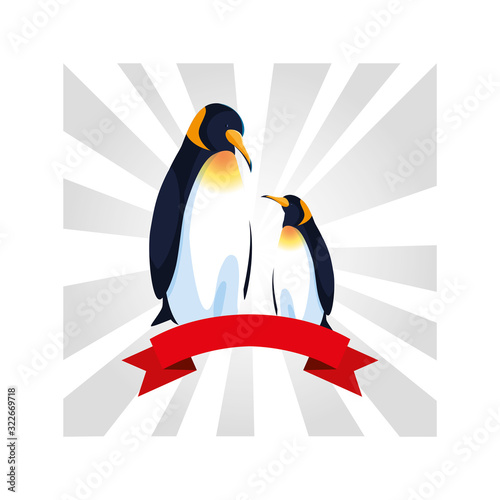 Fototapeta penguins greeting card with ribbon obraz
