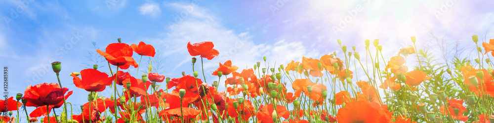 Red poppy flowers on sunny blue sky, poppies spring blossom, green meadow with flowers