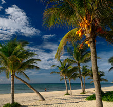 Coconut Palm Trees On The Mayan Riviera Beach With A Lone Jogger
