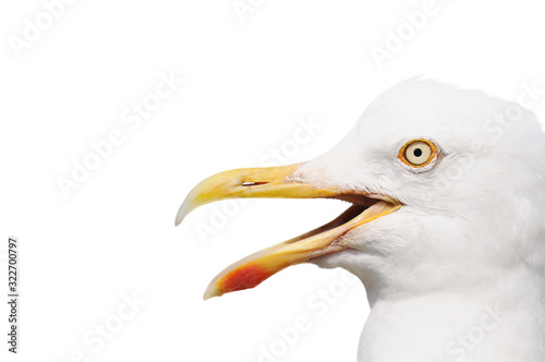 Stampa su Tela seagull with open beak isolated on white