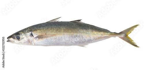 Round scad fish or mackerel scad isolated on white background, Decapterus Slika na platnu