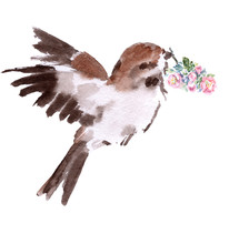 Sparrow With A Branch Of A Blo...