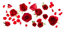 Set Of Red Roses And Petals Is...