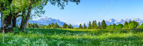 Obraz Herrliche Natur am ostallgäuer Alpenrand im Frühling - fototapety do salonu