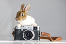 Cute Adorable Baby Bunny Is Si...