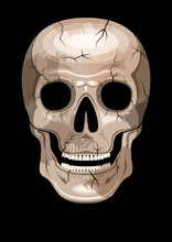 Human Skull With Spots And Cra...