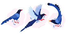 Taiwan Azure Magpie. Set Exotic Birds Of Taiwan And Of Asia. Urocissa Caerulea. Cute Blue Cartoon Bird A In Different Poses And Movements. Hand Drawn Vector Flat Illustration In Scandinavian Style.