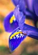 Leinwandbild Motiv Garden flower
